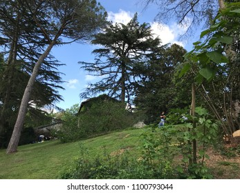 CASTEL GIULIANO, LAZIO, ITALY - MAY 13, 2018: In the beautiful gardens of Palazzo Patrizi, takes place the Roses Festival, exhibition of antique roses, rare, modern, modern, shrubs and vines.