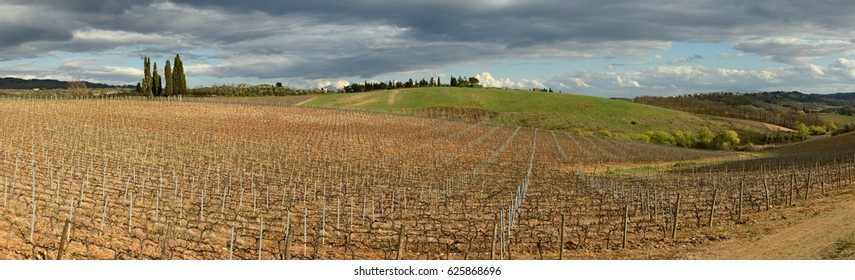 Castellina in Chianti, Tuscany / Italy - MAR 31, 2017: tuscan landscape, vineyards and tuscan cypress trees near Castellina in Chianti (Siena). Italy.