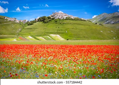 Castelluccio in a blooming field of poppies, Italy