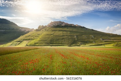 Castelluccio in a blooming field of poppies, Piano Grande, Italy