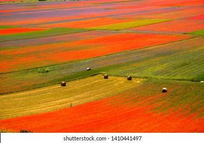Castelluccio di Norcia Italy lentils flowering