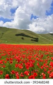 """Castelluccio di Norcia (Umbria, Italy) - The summer flowering (""""fiorita"""")"""