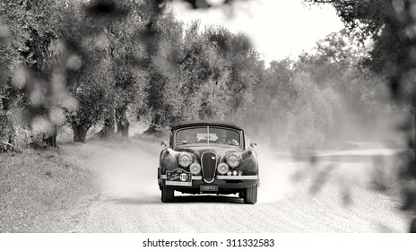 CASTELNUOVO BERARDENGA (SI), ITALY - SEPTEMBER 20: A Jaguar XK120 takes part to the GP Nuvolari classic car race on September 20, 2014 in Castelnuovo Berardenga (SI). The car was built in 1954