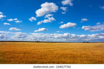 Castile La Mancha cereal fields in Cuenca by Saint James Way of Levante Spain