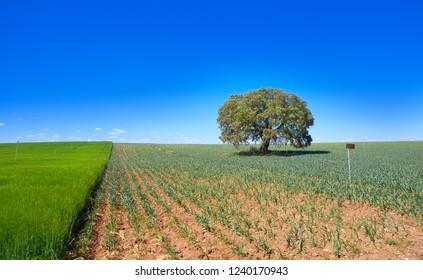 Castile La Mancha fields in Cuenca by Saint James Way of Levante Spain