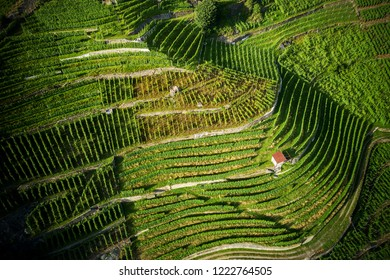 Castionetto di Chiuro - Valtellina (IT) - Panoramic aerial view with vineyards