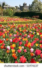 Castle gardens at Arundel castle. Tulips in flower beds in formal park