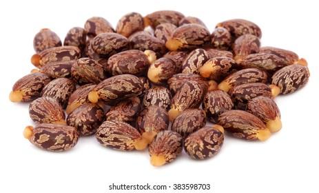 Castor beans over white background