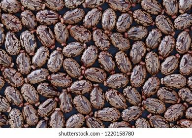 Castor Beans (Ricinus communis) - closeup view
