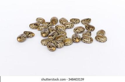 Castor oil seeds  (Ricinus Communis) isolated on white