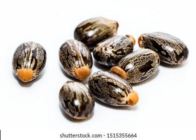 Castor seeds on white background