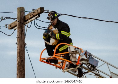 Castro Valley, CA / USA - July 4, 2019 : Alameda County firefighter rescues a cat from a power pole.