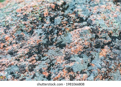 Castroville, Texas, USA. Lichens on a rock in the Texas hill country.
