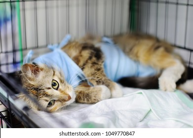 Cat after surgery with bandage in a cage in a veterinary clinic or in an animal shelter