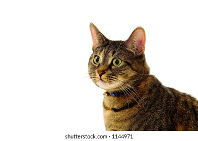 Cat against white background