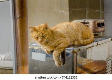 A cat in Ainoshima island.
