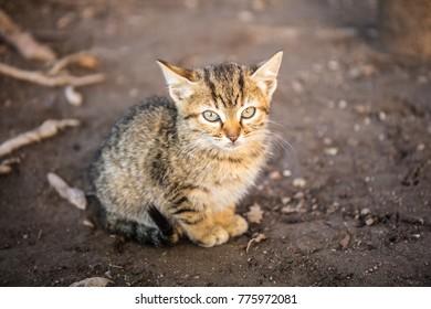 Cat in Alhambra