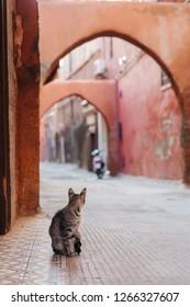 cat in an alleyway in Marrakesh, Morocco
