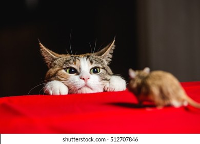 Play dead stock images royalty free images vectors shutterstock cat in an ambush on a mouse hunt spiritdancerdesigns Gallery