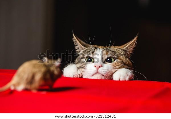 Cat in an ambush on a mouse hunt. Deadlock.