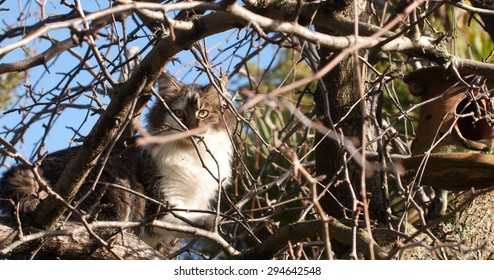 cat among branches of a tree looking at bird feeder hanging nearby