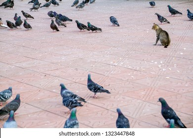 a cat among a flock of pigeons