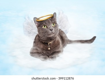 Cat with angel wings and golden halo laying in clouds in the sky