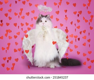 cat with angel wings isolated on pink background