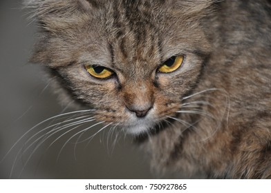 cat with angry face