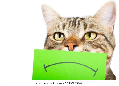 Cat with an angry mouth painted on a cardboard