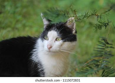 Cat, animal wallpaper, beautiful, animal texture, cat portrait