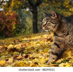 Cat in autumn garden