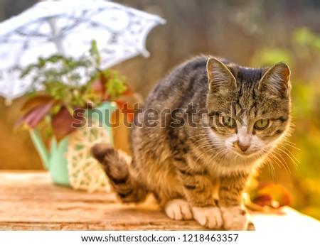cat-autumn-still-life-pet-450w-121846335