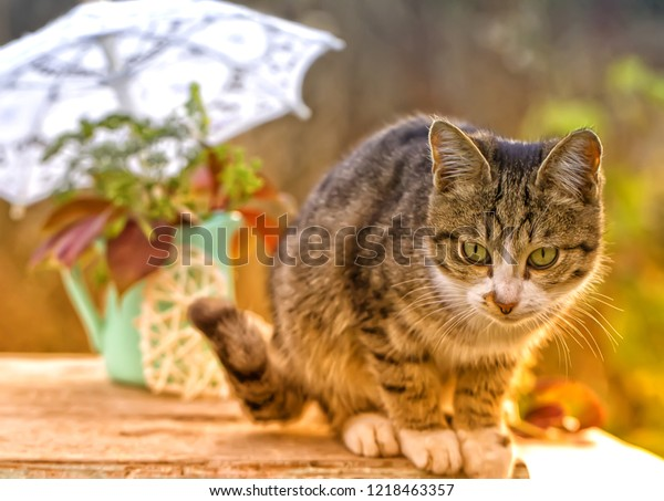 Cat and autumn still life. Pet against the background of an autumn garden.