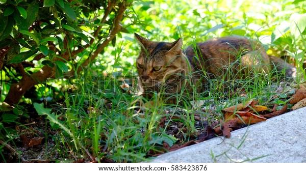 A cat avoiding summer heat