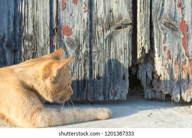 cat-awaits-his-next-victim-260nw-1201387