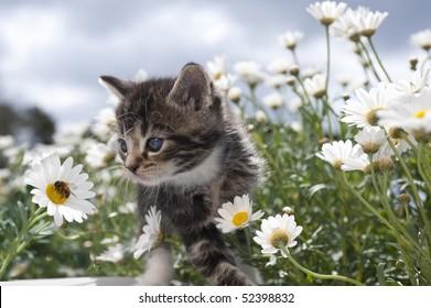 Cat baby between blooms observes bee