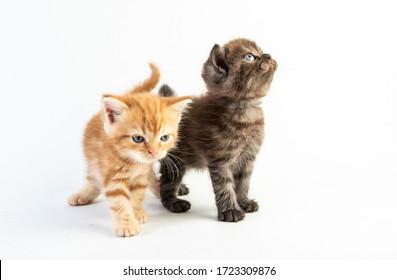 Cat baby tabby Kitten Cute Beautifu on white background