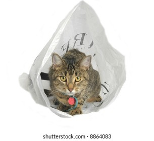 cat in a bag 2 50 iso