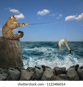 The cat in a bandana is fishing on the stones in the sea.