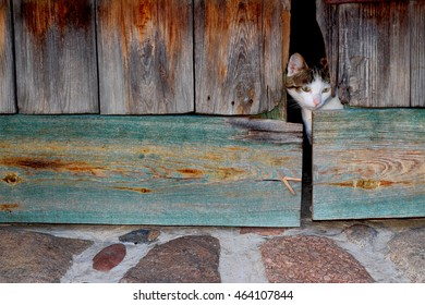 Cat And Barn