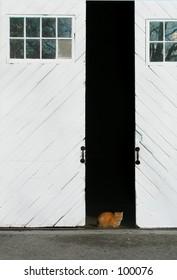 Cat in Barn Door