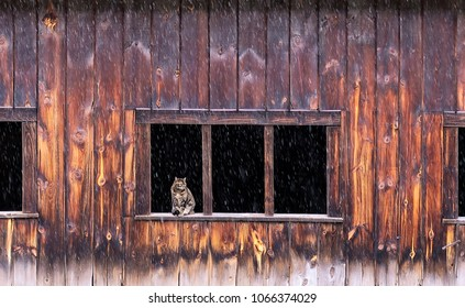 A cat in a barn window while snowing.