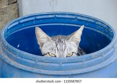 Cat in a Barrel
