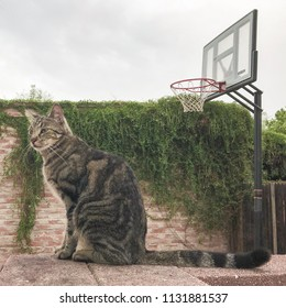 Cat and basketball net