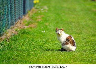 The cat basks on the grass in the spring of the sun.