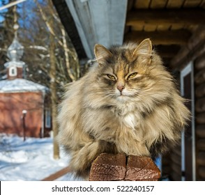 A cat basks in the sun in winter afternoon. Museum-reserve Muranovo, Moscow region, Russia