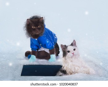 the cat is bathed in the ice in the winter