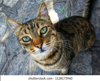Cat with beautiful green eyes looking at the camera
