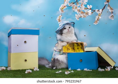 cat the beekeeper extracts honey